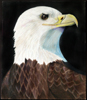 Bald Eagle in Prismacolor by Christine Boyce