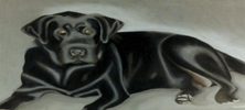 Bodie the Black Labrador in Pastel by Christine Boyce